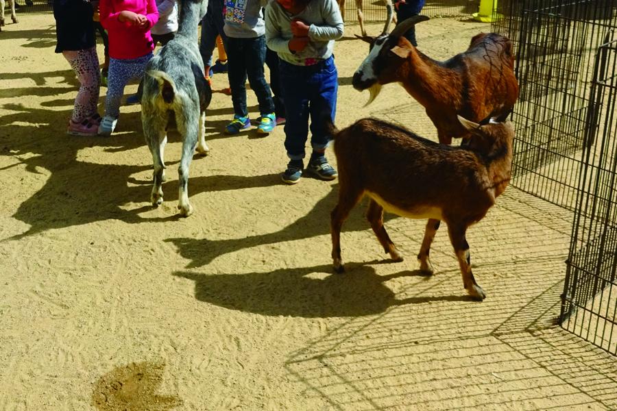 移動動物園1